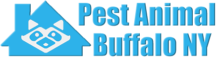 Buffalo Wildlife and Animal Removal